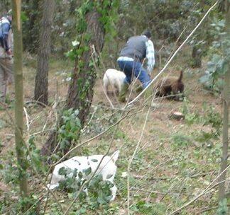 Corsi Addestramento cani da Tartufo